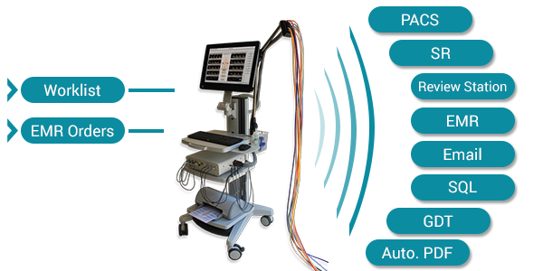Falcon Peripheral Vascular Network Connectivity